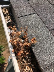 A picture of a clogged gutter